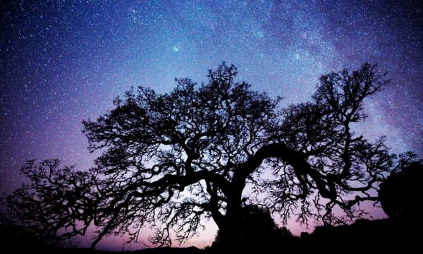 A silhouette of an oak tree under the Milky Way and night sky near Sonoma Lake and Healdsburg, CA.
